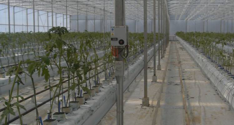 article13_eumundi_pipe_hydroponics_farm_